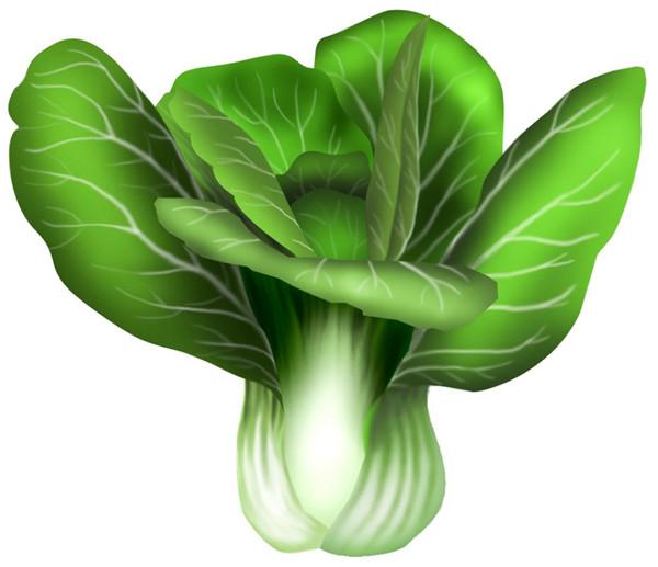油菜的根茎叶结构图